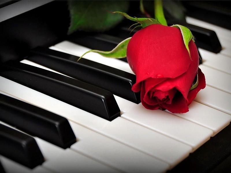 Cách chọn mua đàn piano phù hợp với nhu cầu và mục đích sử dụng (phần 2)